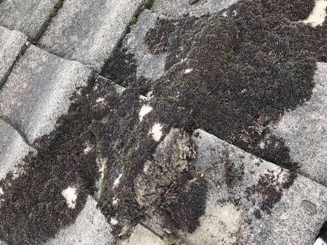京都市上京区にて 屋根掃除
