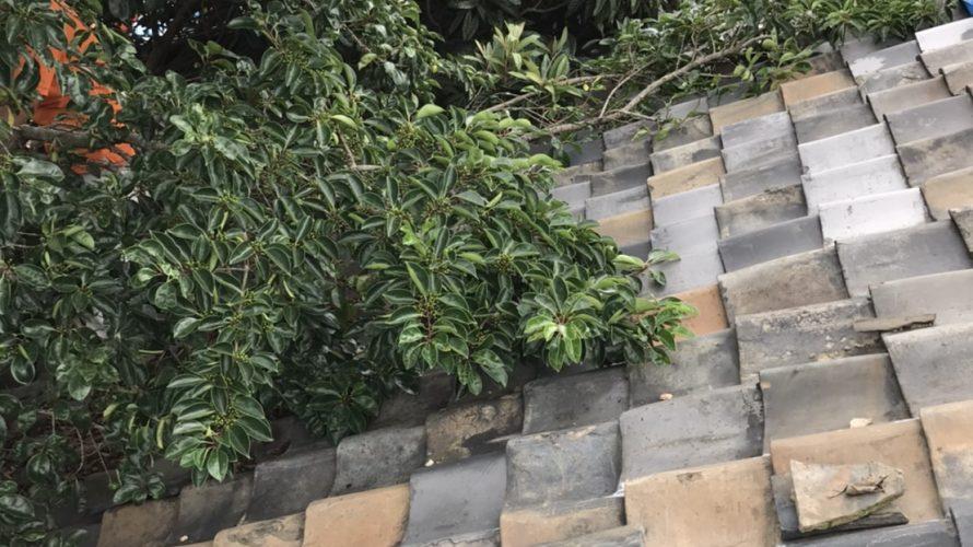 京都市上京区にて屋根修理 ~葺き替え~